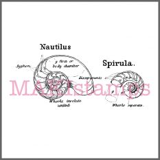nautilus rubber stamp MAKIstamps