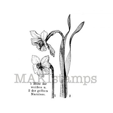 Jonquil stamp makistamps