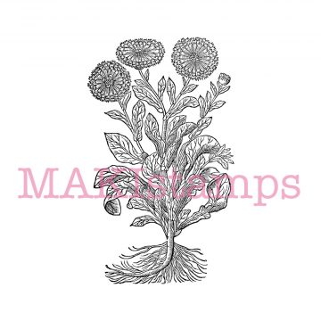 Stempel Blume