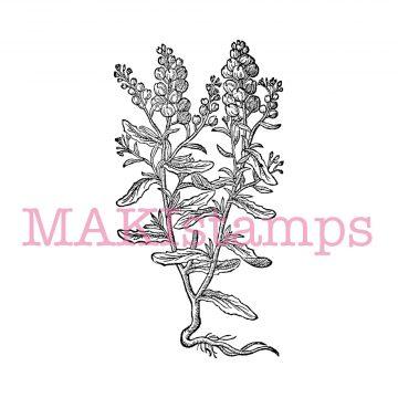 Pflanze Stempel