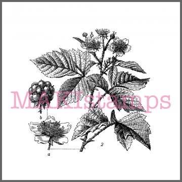 Marmelade Stempel