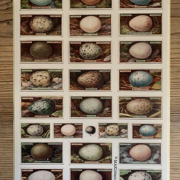 sticker vintage birds eggs MAKIstamps