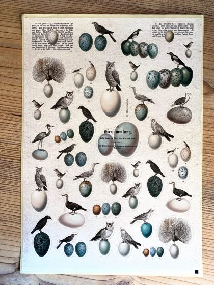 MAKIstamps paper stickers birds and eggs