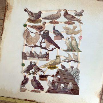 vintage style paper scraps pigeons