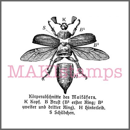 Käfer Stempel