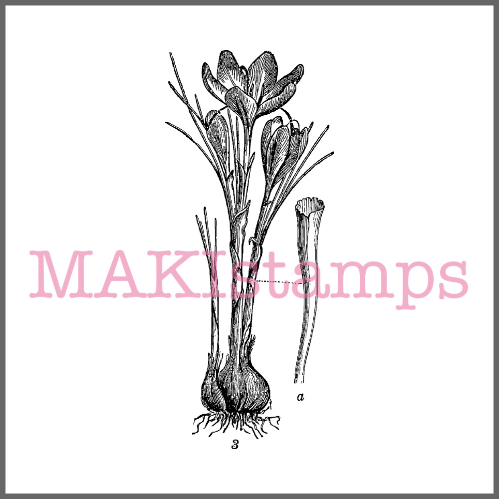 flower rubber stamp crocus saffron