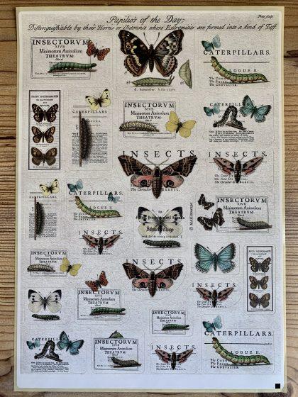 butterfly sticker MAKIstamps