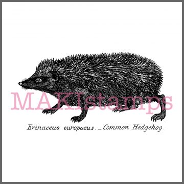 rubber stamp hedgehog
