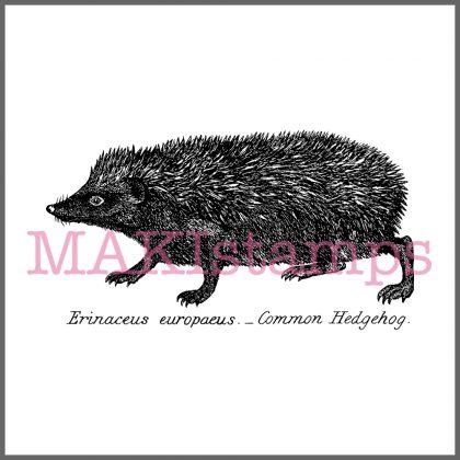 rubber stamp hedgehog