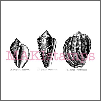 rubber stamp conches