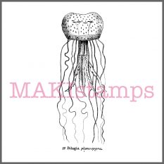 jellyfish rubber stamp MAKIstamps