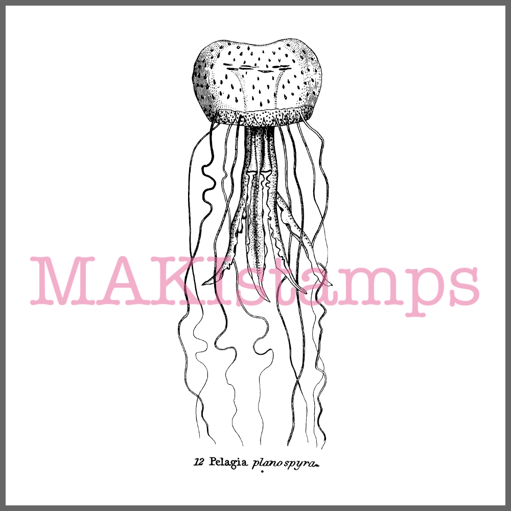 jellyfish rubber stamp squid