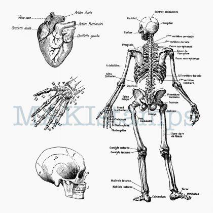 Stempel Set Skelett