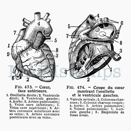 Stempel Herz MAKIstamps
