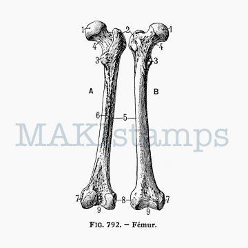 Stempel Knochen Motivstempel MAKIstamps
