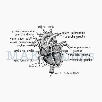 Medizin Stempel Herz MAKIstamps
