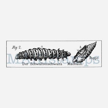 caterpillar stamp MAKIstamps journaling stamps