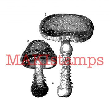 botanical fly agaric rubber stamp