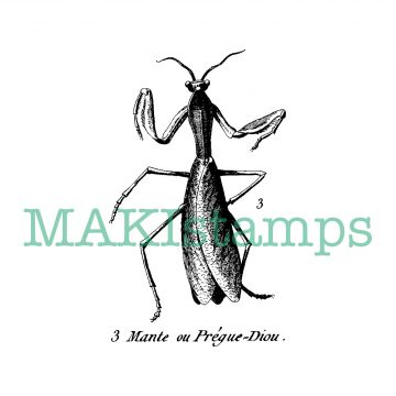 vintage insect rubber stamp mantis