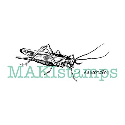 insect rubber stamp locust