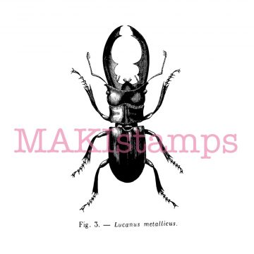 stag beetle rubber stamp MAKistamps