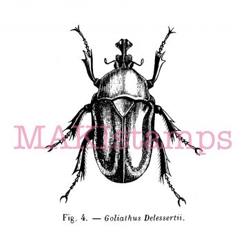 bug rubber stamp MAKIstamps