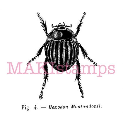 insect stamp beetle