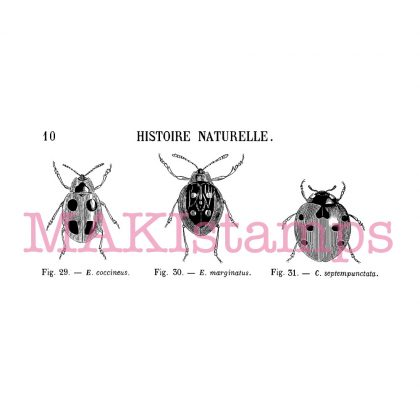 Rubber art stamp set lady bug