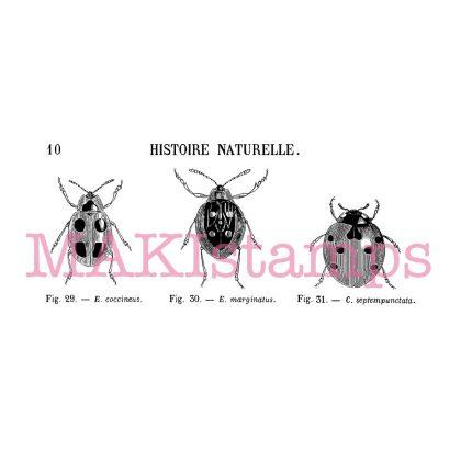 Rubber art stamp set lady bug