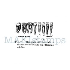 rubber art stamp teeth