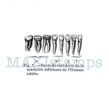 rubber art stamp teeth