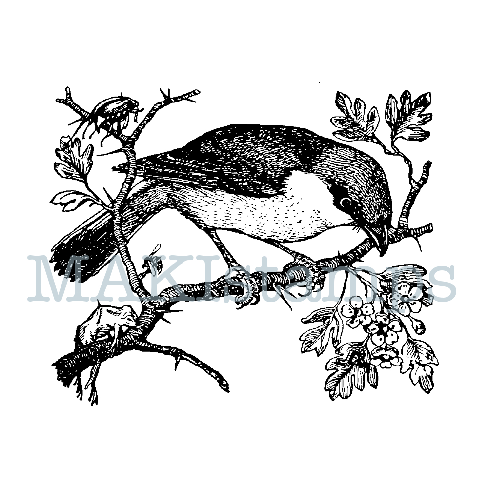 red-backed shrike rubber stamp