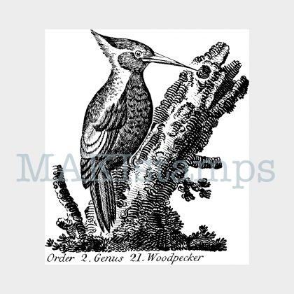 woodpecker rubber stamp MAKIstamps