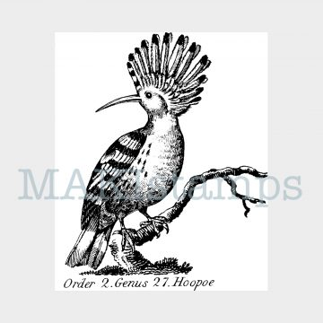 Hoopoe rubber stamp MAKIstamps