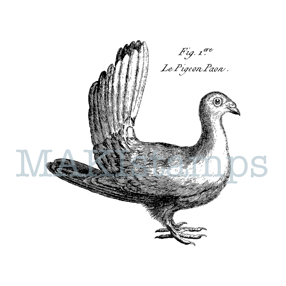 rubber art stamp pigeon MAKIstamps
