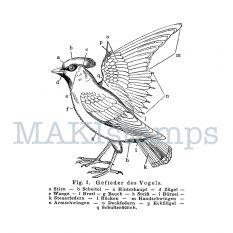 Vogelstempel Schulbuch Darstellung MAKIstamps