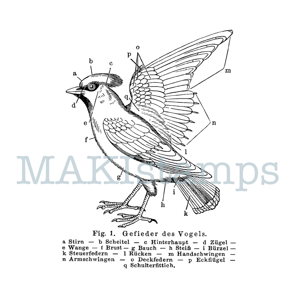 rubber stamp bird science stamp MAKIstamps
