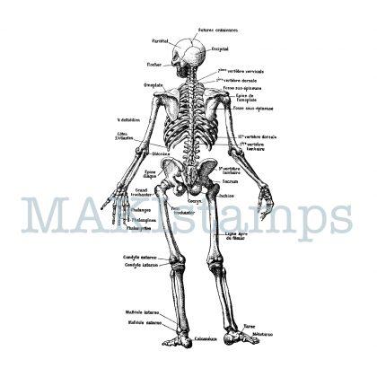 rubber stamp skeleton MAKIstamps