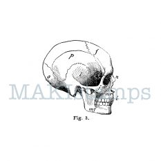 rubber stamp Halloween skull MAKIstamps