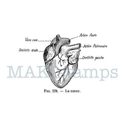 science rubber stamp heart