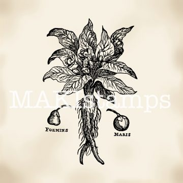 Rubber stamp Mandrake root MAKIstamps