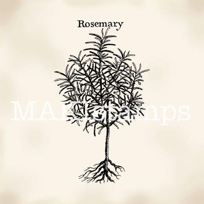 Pflanzenstempel Rosmarin MAKIstamps