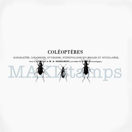 Käfer und Text Stempel MAKIstamps