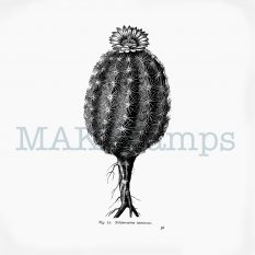 Plant rubber stamp cactus MAKIstamps