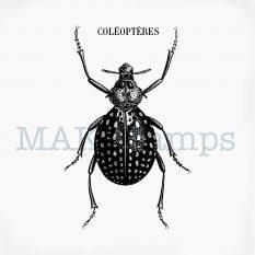 Rubber art stamp vintage beetle MAKIstamps