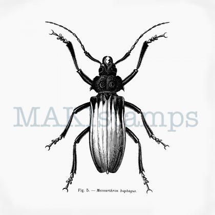 Scientific beetle rubber stamp MAKIstamps