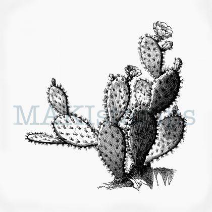 Kaktus Stempel Opuntie MAKIstamps