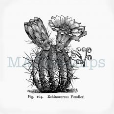 Blossoming cactus rubber stamp MAKIstamps