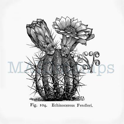 Blühender Kaktus Stempel MAKIstamps