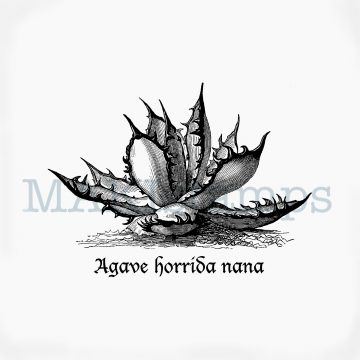 Halloween Stempel Agave Horrida MAKIstamps